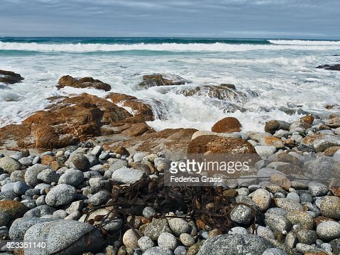 Giant kelp (Macrocystis pyrifera) on the beach at Monterey, Along The 17-Mile Drive