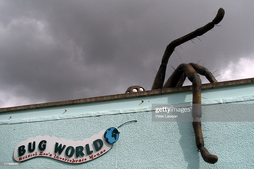 CONTENT] A giant model of a spider sits atop a building housing Bristol Zoo's collection of insects