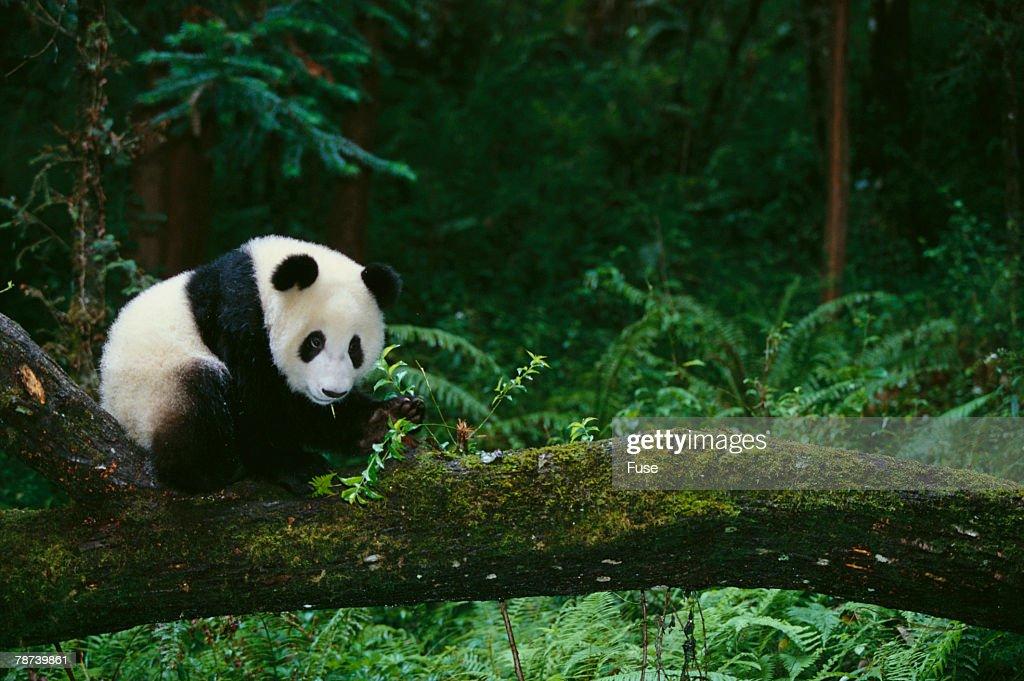 wwf panda forest - photo #6