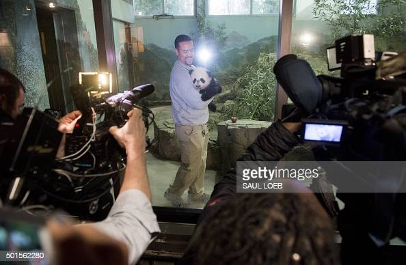 Giant Panda keeper Juan Rodriguez holds Bei Bei born on August 22 inside his enclosure as Bei Bei makes his first media appearance at the Smithsonian...