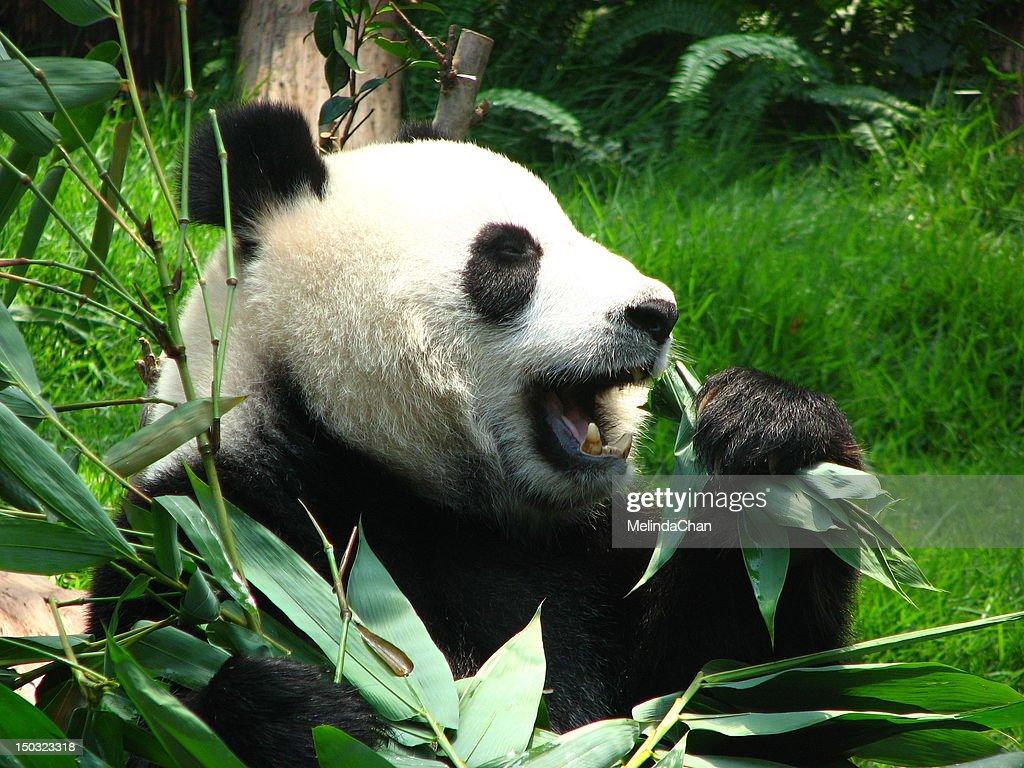 Bamboo Fanatics
