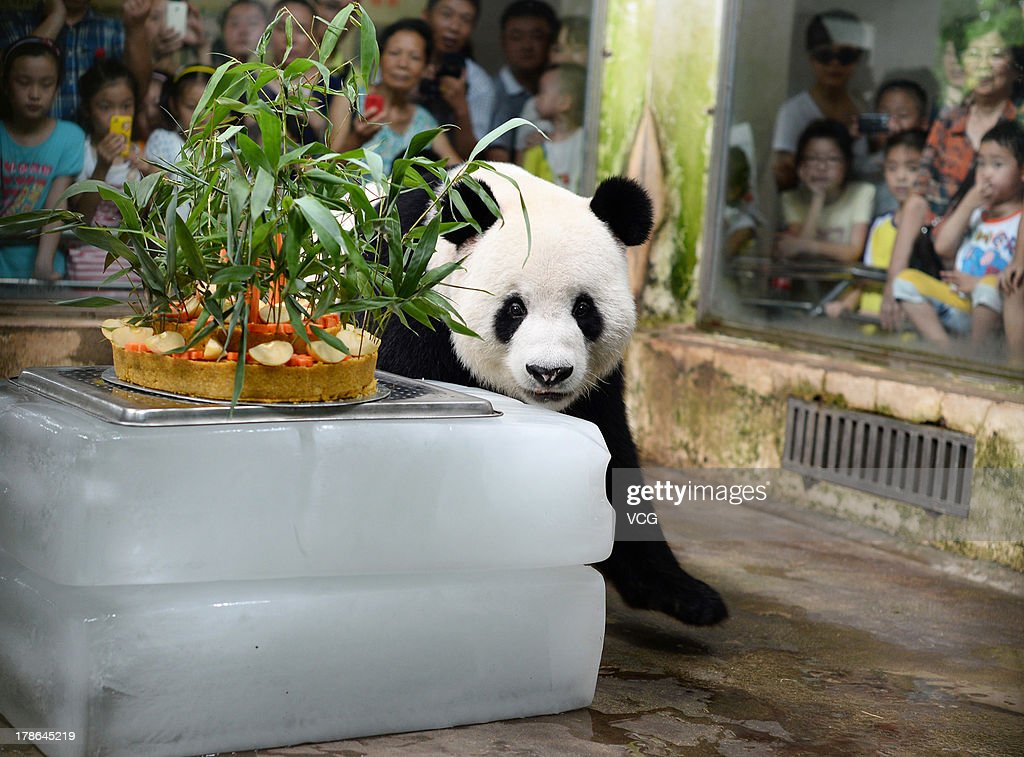 Giant panda Wei Wei looks at a cake at Wuhan zoo on August 29, 2013 in Wuhan, China. Wuhan zoo held an event to celebrate panda Wei Wei's 8th birthday with a cake made from water, soybean, bamboo, corn, apple, and carrot.