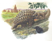 Giant Pangolin carrying young on its tail illustration