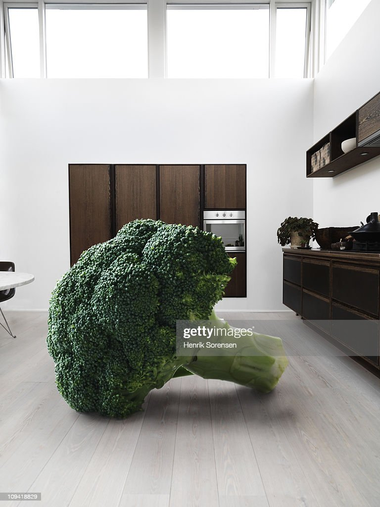 Giant piece of broccoli in a kitchen