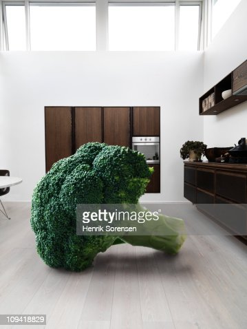 Giant piece of broccoli in a kitchen : Stock Photo