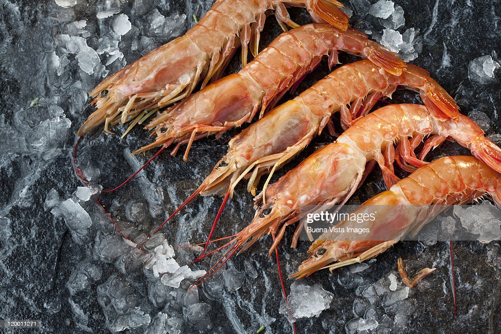 Giant prawns ready to be cooked : Stock Photo