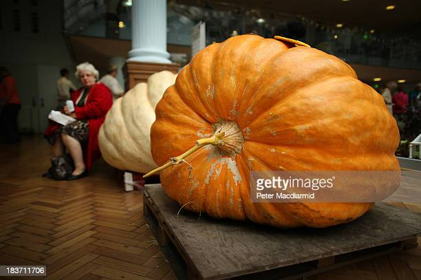 Giant pumpkins sit on pallets at the Royal Horticultural Society Harvest Festival Show on October 9 2013 in London England The nation's enthusiasts...