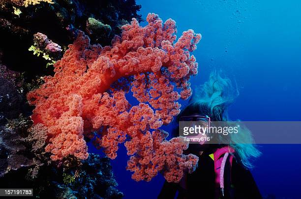 Giant Red Soft Coral