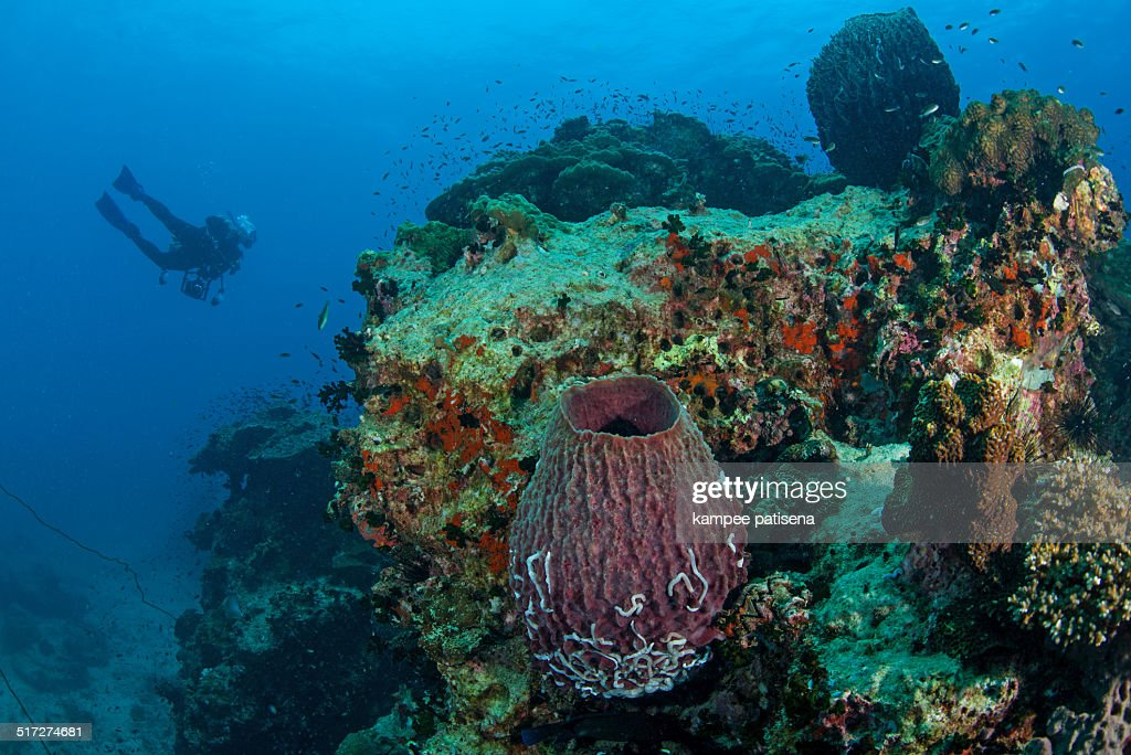 Giant sponge and coral reef