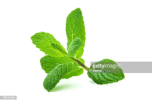 A giant sprig of lit mint on a white background