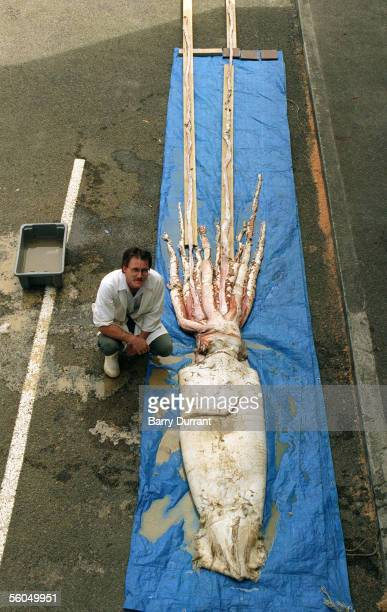 Giant Squid on display on the Wellington dockside caught off the coast of New Zealand