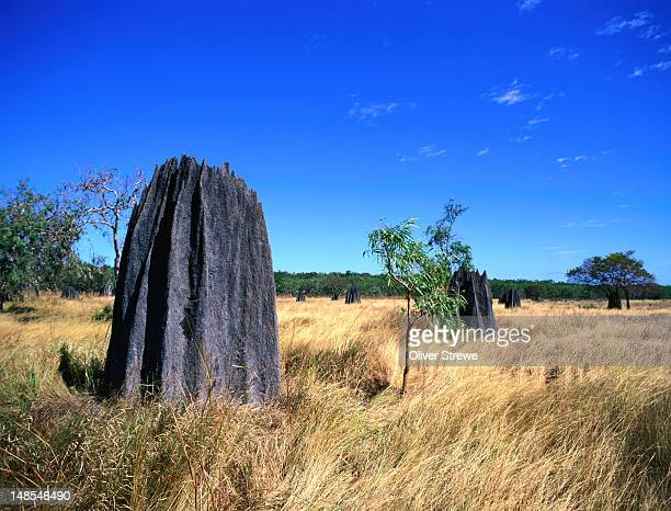 Giant termite mounds in the Lakefield National Park on the Cape York Peninsula.