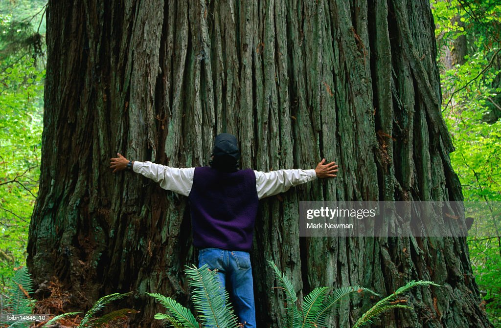 Giant tree at Jedediah Smith Redwood State Park., California, United States of America, North America : Stock Photo