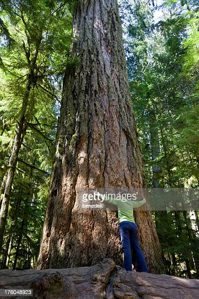 Giant Tree, Old Growth Forest