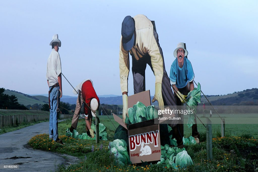 Giant wooden murals of a farmworker are seen at 'The Farm' February 9 2005 in Salinas California Artist John Cerney created his giant lifelike murals...