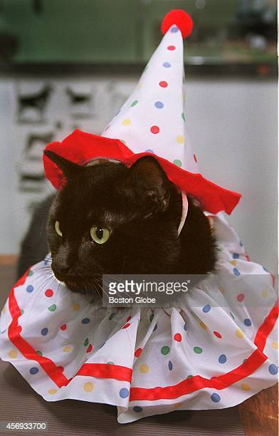 Gilda the cat in her clown Halloween costume at The Cutting Edge