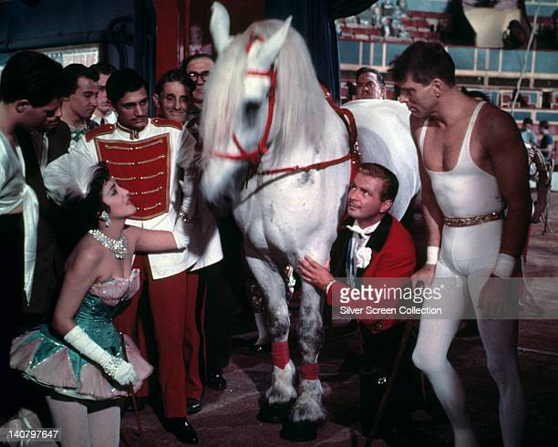 Gina Lollobrigida Italian actress and Burt Lancaster US actor stand either side of a white horse in a publicity still issued for the film 'Trapeze'...