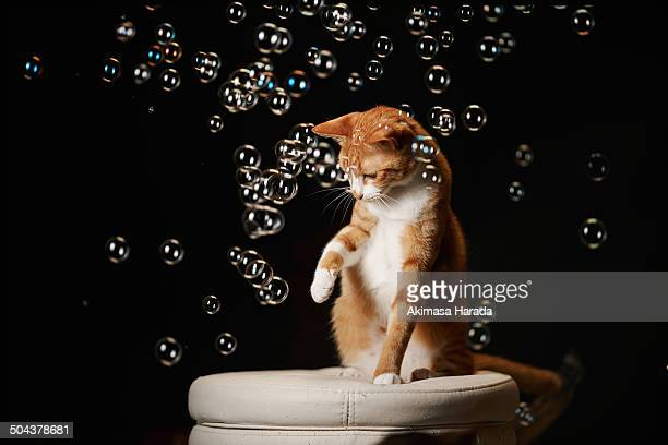 Ginger cat and many tiny bubbles