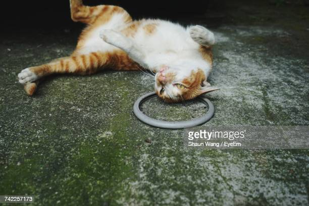 Ginger Cat Looking Away While Lying Down On Floor