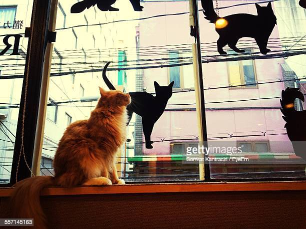 Ginger Cat Looking On Stickers In Shape Of Cats On Window