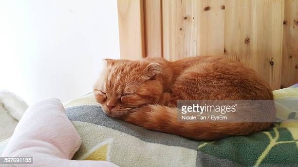 Ginger Cat Relaxing On Bed At Home