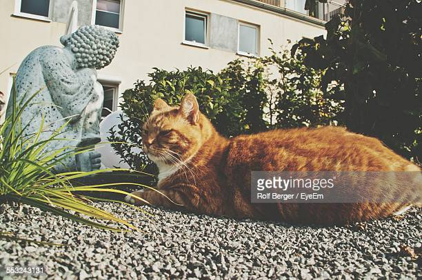 Ginger Cat Resting In Front Of Sculpture Against Building
