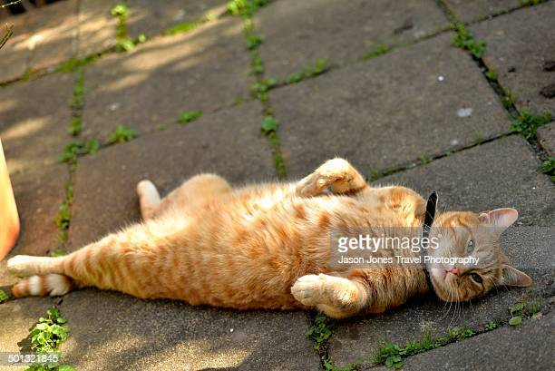 Ginger Cat rests on his back