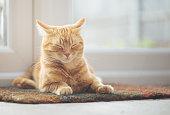 Ginger cat sleeping on doormat
