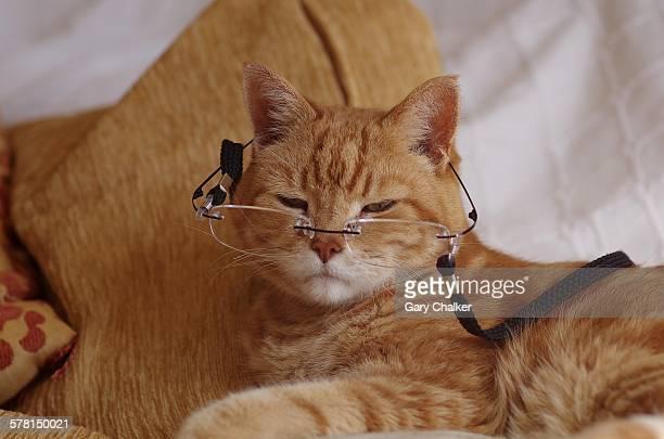 Ginger cat wearing glasses