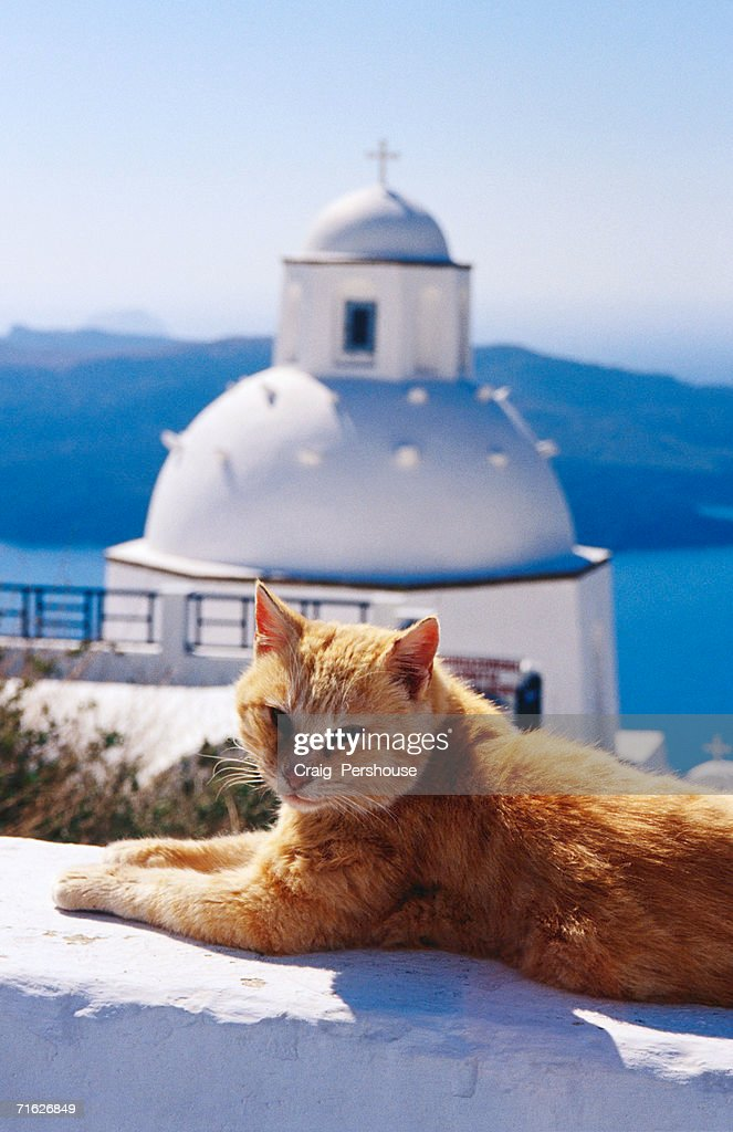 Ginger cat with whitewashed church dome in background, Fira, Greece : Stock Photo