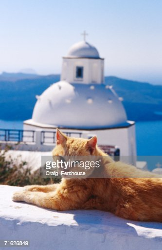 Ginger cat with whitewashed church dome in background, Fira, Greece : ストックフォト