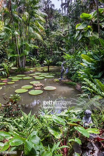 Ginger Garden rainforrest scenery