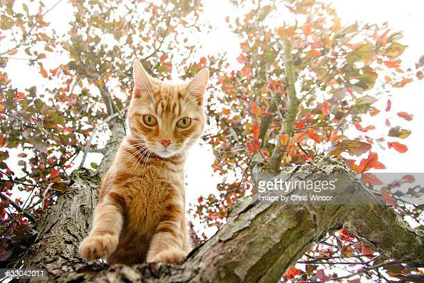 Ginger in the tree