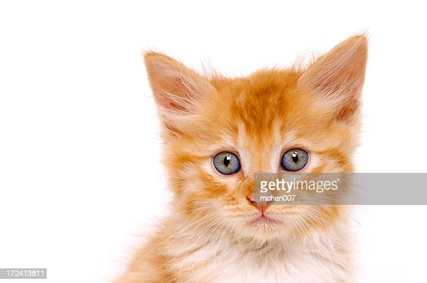 Ginger kitten looking lost and alone