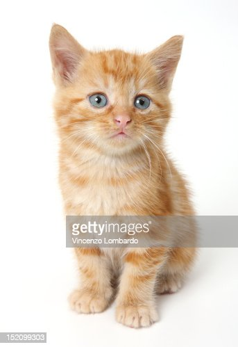 Ginger Kitten : Stock Photo