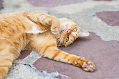 Playful red cat rolls on the shabby concrete floor outdoors.
