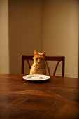 Ginger tabby cat sitting at dining table with fish in plate
