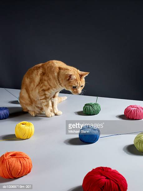 Ginger tabby cat sitting on table looking at woollen balls