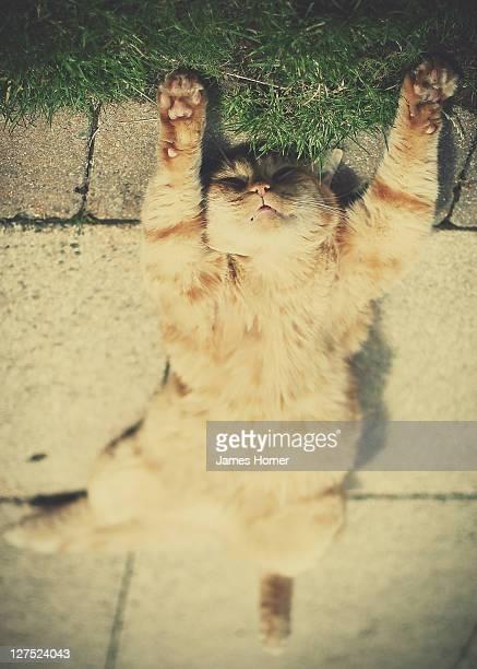 Ginger tabby cat sunbathing