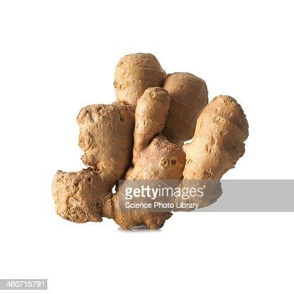 Ginger Zingiber officinale rhizome