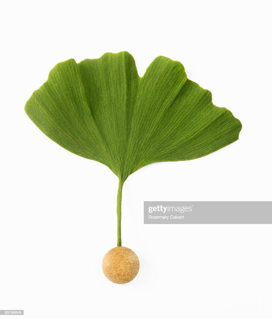Gingko leaf and gingko pill