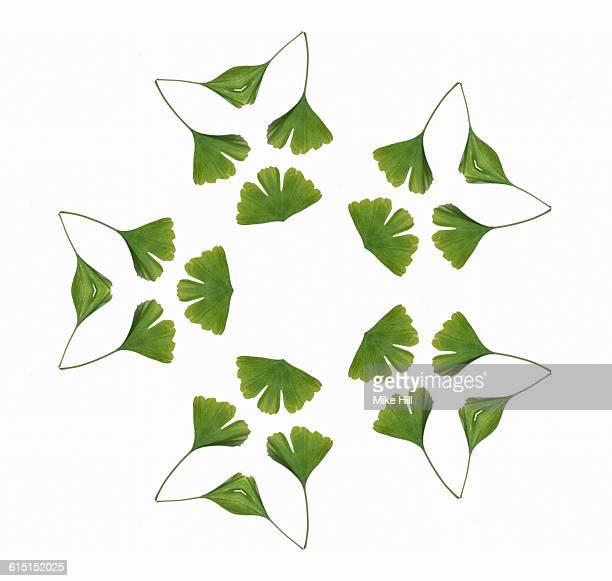 Ginkgo Leaf Mandala