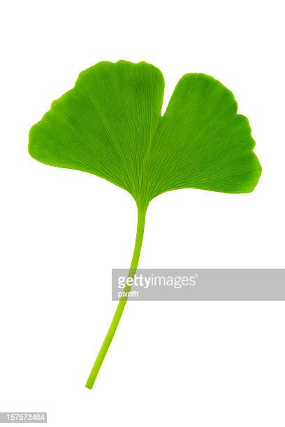 Ginkgo leaf with clipping path