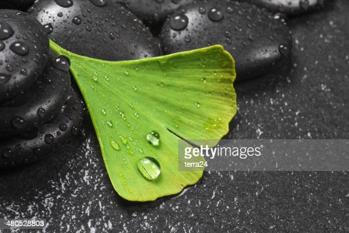 Ginkgo leaves : Stockfoto