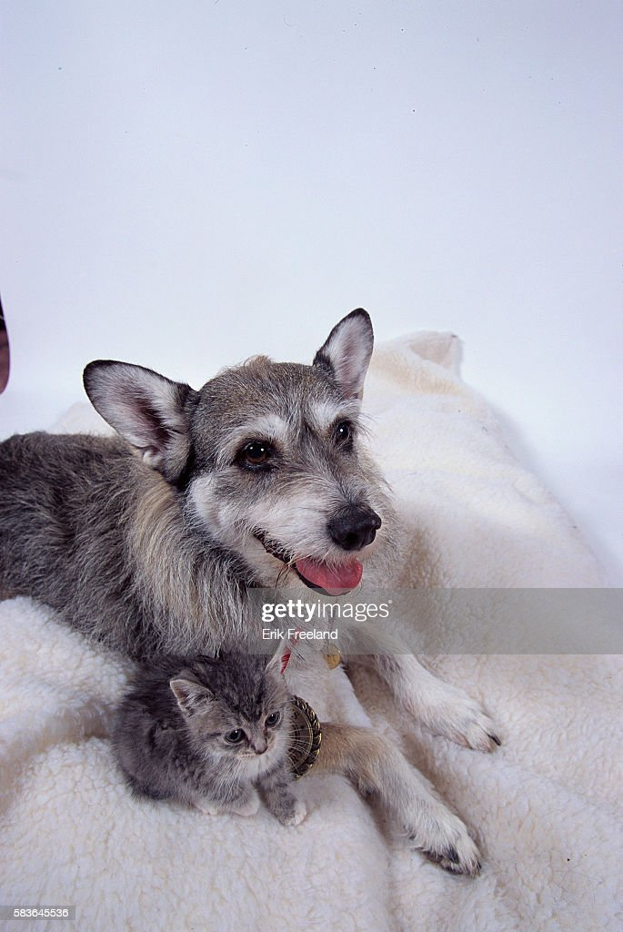Ginny the rescue dog sits with one of her foundlings Ginny a former pound dog leads her owner Phillip Gonzalez around Long Island New York and shows...