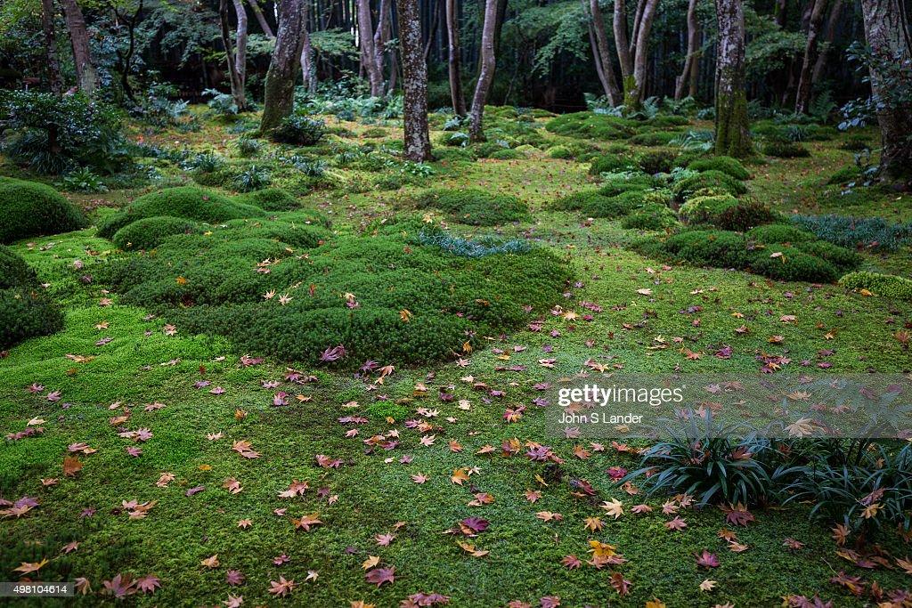 Gio Ji Temple Garden In Arashiyama Kyoto In Recent Years