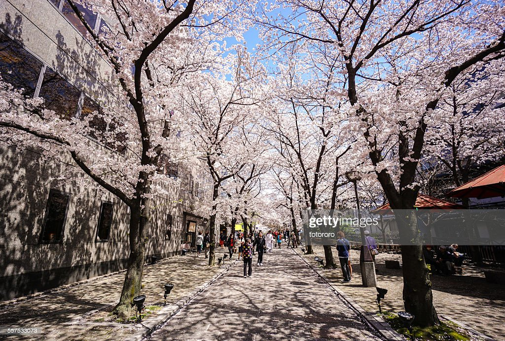 Gion in Spring in Kyoto Japan