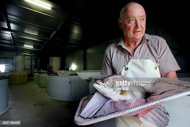 Gippsland Barramundi grower Brian Fox with one of his prized fish ready for the table at his Garfield fish farm today 27 February 2007 THE AGE NEWS...