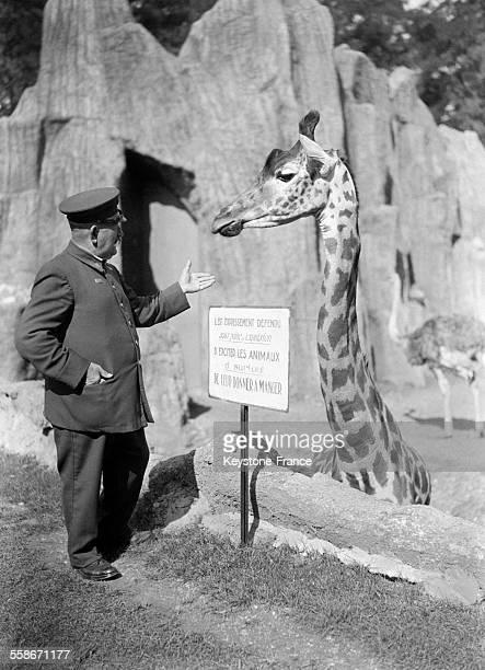 Girafe dans le zoo de Vincennes pendant l'Exposition coloniale à Paris France en 1931