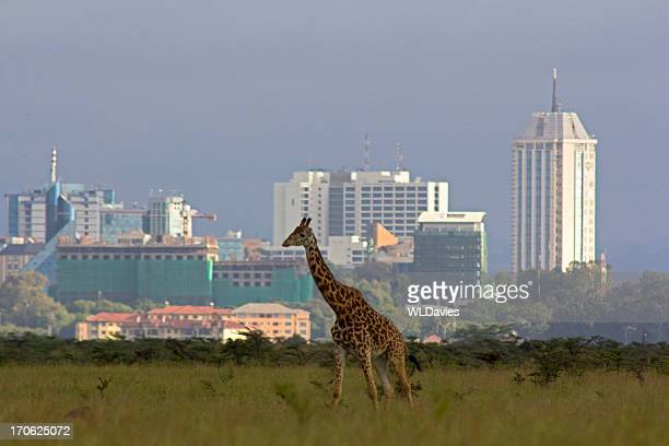 Giraffe against city skyline